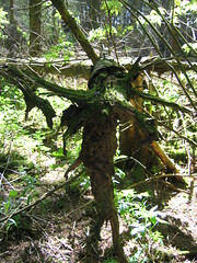 140_4040 (Ramsay2) Tags: forest wood fairy pixie goblin ent creature