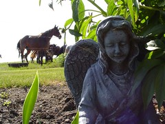 There are Angels amoung us........ (salgal) Tags: horses angels memory kiss2 kiss3 kiss1 kiss4 kiss5