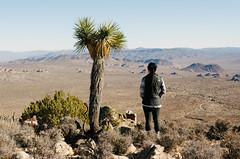 Joshua Tree (HikerDude24) Tags: joshuatree nationalpark joshuatreenationalpark california outdoors nature desert hiking dayhike nikon d5100