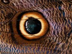 Asa (Luiz C. Salama) Tags: interestingness c explorer explore 500 destaque mariposa luiz interessantes salama ocioso flickrtop500 drocio duetos luizsalama salamaluiz metareplyrecover2allsearchprigoogleover
