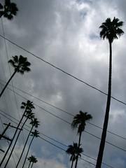 power palms (7-how-7) Tags: california clouds losangeles power snap palm photodomino atwater urbannature praiseandcurseofthecity photodomino060 urbannatureblog