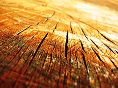 Wood Plane (sixfoot6) Tags: wood stump grain orange brown fiber crack bark depthoffield