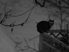 Glowing Eyes (Steffe) Tags: bw cat cutout eyes europe sweden glowing tungelsta bergdalen yf freakyeyedcats top20fav2005 20topfaves2005