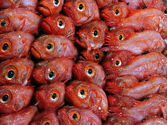 Tsukiji Fish Market (cranrob) Tags: red fish animal japan eyes savedbythedeletemegroup market tsukiji seafood tsukijifishmarket pks dopplr:explore=1351