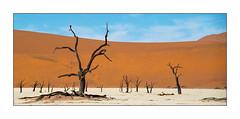 Dead Trees (Walter Quirtmair) Tags: film 2004 desert dune namibia swq takenbywalter namib eos750