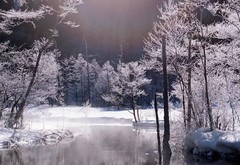 ray of icetrees (転倒虫) Tags: winter white snow ice japan forest ray 冬 kamikouchi 上高地 霧氷