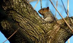 050318 1518 15 (Ryan Brenizer) Tags: 2005 finepixs2pro fuji harlem manhattan morningsidepark noflash nyc park squirrel upperwestside sigma28300mmf3563dl