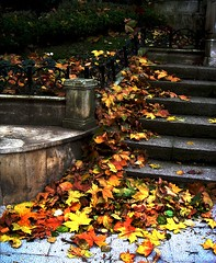 Leaves, Stairs and Concrete (Digital Owl) Tags: autumn leaves bilbao zb 50v5f mge digitalowl digiowl