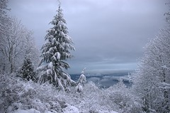 Snow on Sammamish (Mark Griffith) Tags: snow wow washington interestingness hiking interestingness1 hike pines issaquah cougarmountain lakesammamish issaquahalps 1000v30f nikonstunninggallery antiaircraftviewpoint mbgphotoframe