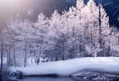 ray of icetrees2 (転倒虫) Tags: snow nature topv111 japan forest kamikouchi