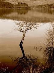 Loch lomond (dmcn) Tags: scotland loch lomond lochlomond