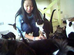 Melissa (sosgatinhos) Tags: rescue cats love cat furry feline kitty gatos gato felinos felino shelter adopt adoption adoo peludo adote abrigo animalwelfare catlover kities sosgatinhos