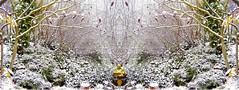 snowy garden meditative bookmark