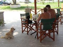 Freddie's Beach Bar (RobW_) Tags: 2003 sea summer sun beer coffee bars holidays tea greece wallace freddie zante zakynthos freddiesbar tsilivi