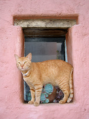 SIMBA (rainy city) Tags: window cat wow simba catsandwindows