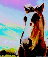 Ko (MadPole) Tags: new uk horses horse animals forest ilovenature caballo cheval ross kali profile sid uma gimp hampshire cal ponies ros cavallo cavalo pferd esp mal kin newforest konie each kuda alogo ka horsies hest equus hevonen chevaux paard cavall kon hors sous  rta kone yegua hst ceffyl animalportrait  hesp assa   l  morin ko arklys hestur hynder  chaval koniki  perd  eoh  zaldi horseportrait k caval chelee  ks caballu perd konj march  kabayo soquili sobah kobila evalo hobu hobune cjaval cabalo  ippos   kavaju  ghod  av  turag hross kavalo capall  kudure ciaval tashunke caballus zirgs k  iemel cahuayo kavale hengest mearh kaviyu grast harmasari grasni load heasta cubaddu acchettu coallu va k  beygir   m madpolestream