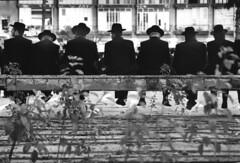 demonstrtion of religious people in Tel Aviv (Dubi Feiner) Tags: life street city light people woman man art love ass face hat religious photography israel tel aviv documentary nikonlens demonstrtion dubifeiner wwwornadubicoil