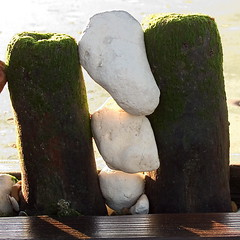 "fence and stones<br /><span style=""font-size:0.8em;"">White Chalk stones trapped between fence posts on Hunstanston Beach, Norfolk.</span> • <a style=""font-size:0.8em;"" href=""https://www.flickr.com/photos/87605699@N00/77314666/"" target=""_blank"">View on Flickr</a>"