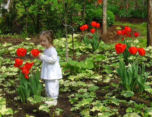 Amongst the tulips