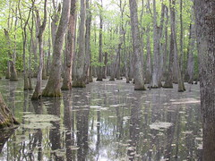 Cypress Swamp I (matt.walter) Tags: cypress swamp mississippi reflection