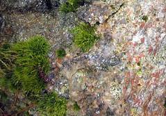 mossy rock (mimbrava) Tags: rock moss mimbrava themerock
