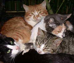 four cats (ggrozoma) Tags: cat nikoncoolpix995