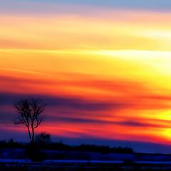 Spectrum* (Imapix) Tags: voyage travel sunset canada tree art nature colors canon photography soleil photo bravo foto photographie spectrum image quebec quality qubec cou