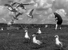 Flying Mind (Mingfong) Tags: life travel summer blackandwhite bw cloud cute 2004 monochrome minnesota birds kids children geotagged fun happy fly flying cloudy seagull joy happiness story albumcover lovely stories mn duluth  mingfong musicflyer mingfongjan artbrochure sketchoflight mingfongphotography