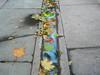 spilled milk (johanna) Tags: london leaves vintage milk pavement flowermarket columbiaroad anoldchestnutfromfotolog