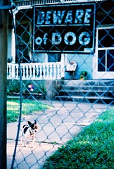1 pound of fury (jj look) Tags: dog chihuahua sign austin xpro crossprocessed texas beware eastside 78702