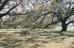 Nice picnic location (NosniboR80) Tags: liveoaks deleteme deleteme1 saveme deleteme3 deleteme5 deleteme6 deleteme7 deleteme8 deleteme9 deleteme10