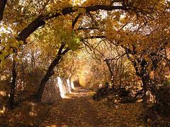 Ajin dojin (Beshef) Tags: autumn nature landscape iran  karaj farsi    ajindoin