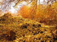 Ajin dojin (Beshef) Tags: autumn ajindoin karaj iran nature