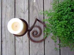 Maidenhair Fern and Koru Candlestick (pauly...) Tags: plant fern helecho outdoors candles amiko ferns greenplants koru candlesticks helechos