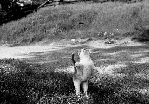 Cat Jump 1 by Robbie Sproule