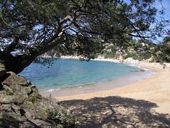 Pi a la roca (CytecK) Tags: sea beach playa paisaje costabrava cala lloret canyelles