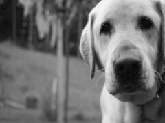 A Dog's Life (Sylvain Sylvain) Tags: bw blanco branco canon 350d negro preto nb weis bianco nero schwarz sylvainsylvain 黑白色 sylvainclep 백색 m3l0dym4k3r 黒い白 까만