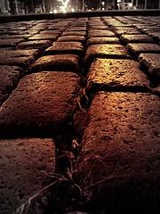 Adoquines (Libertinus) Tags: geotagged floor picasa s5000 montevideo cobbles adoquines piso plazadelejercito geolat34869727 geolon5616771