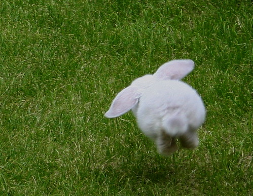 The Bunny Hop | Flickr - Photo Sharing!