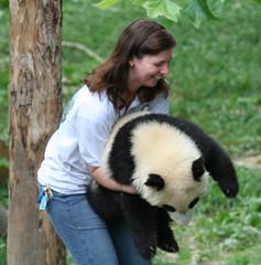 Can't run from me now (somesai) Tags: panda tian tai lookdown nationalzoo endangered pandas meixiang taishan dczoo butterstick pandaunlimited