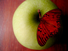 fruto proibido (*zillig) Tags: red macro verde green apple thanks butterfly ilovenature natureza touch 100v10f special gift borboleta surpresa secretgarden presente ma fruto