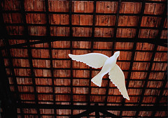 Divino (Alê Santos) Tags: party brazil bird art june brasil fly arte spirit artesanato paloma holy ave paulo festa são telhado santo junina espírito pomba vôo sesc pompéia divino sobrevôo mop082006 mop08061