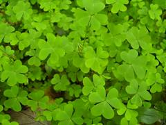 No necesito treboles de cuatro hojas para tener suerte... - by Giselle Salas [ Darkla ]
