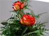 Roses (derbenjamin) Tags: flowers roses flower green love nice smell nicesmell