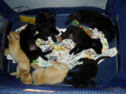 7 napping puppies