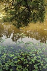 (S E B) Tags: nikon d2x houston arboretum humidity memorialpark sebastienettinger