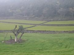 Tea Plantation, Jeju Island (oinonio) Tags: tea korea jeju teaplantation