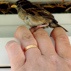 Bird in Hand with Nest and Ring