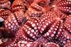 Tako (BenM135) Tags: food fish topv111 sushi explore squid octopus fishmarket tako interestingness48 i500 explore21june06