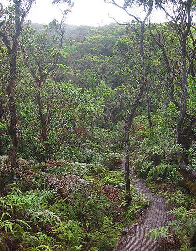 Alakai Swamp, Kauai